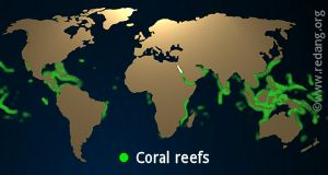 worldwide coral distribution